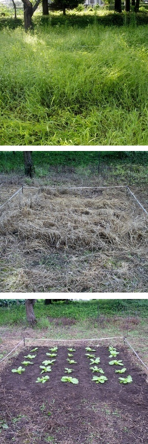 写真上から「液剤散布前」・「液剤散布後」・「液剤散布後定植」の様子。除草後も種まきや苗の植え付けが可能。