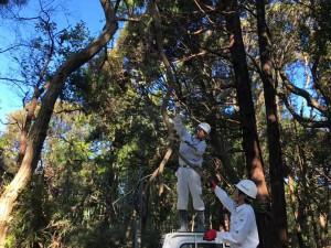 県内至る所で倒木処理が行われた(興和建設)